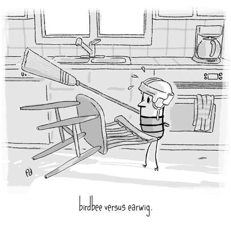 birdbee versus earwig